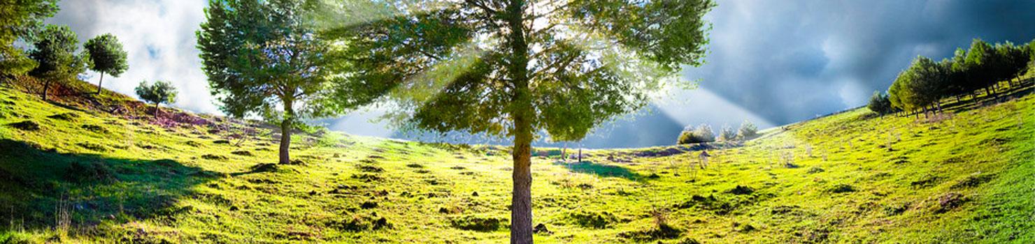 green-nature2
